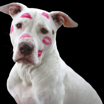 hond lenen, love