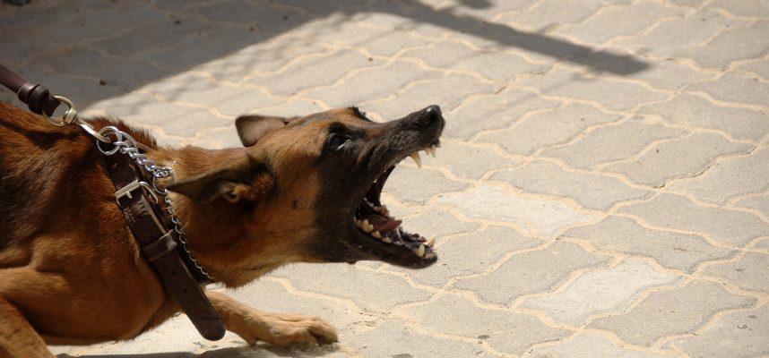 verlatingsangst, hond, agressie