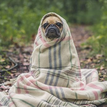 vakantieoppas,hond